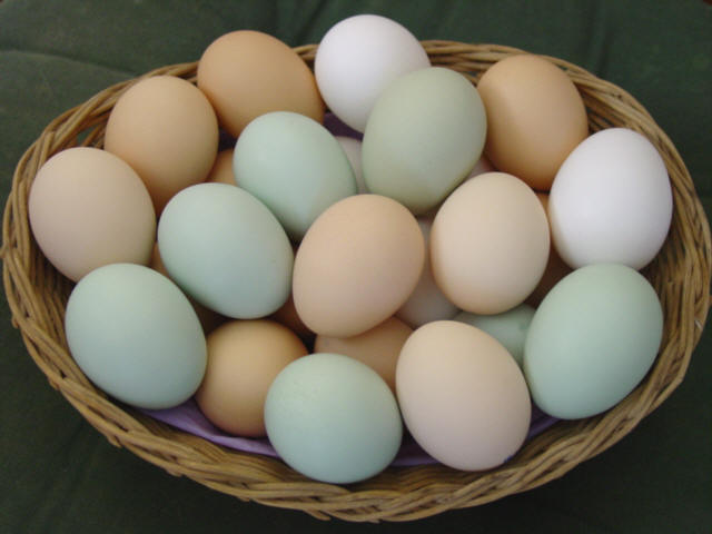 The nutrition information of egg